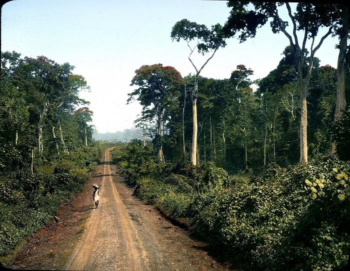 Дорога на восток через джунгли плато Масинди возле Бутиаба.