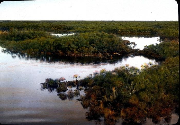 Плавающие острова папируса на озере Кьога.