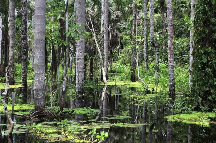 Заповедник с самым большим количеством биологических видов в мире.
