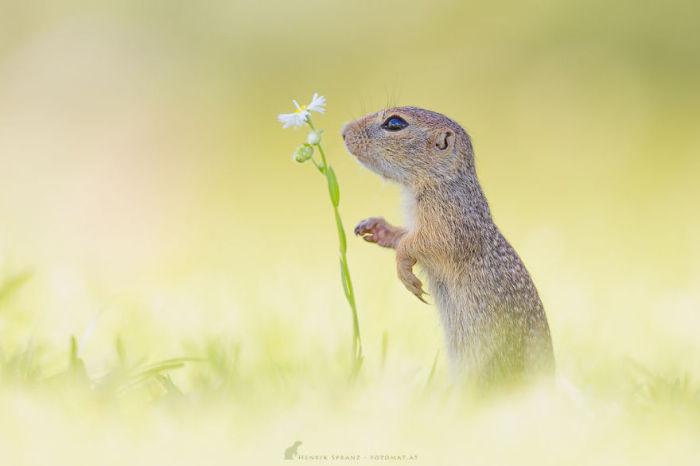 Суслики поедают все злаковые, а также многолетние травы.