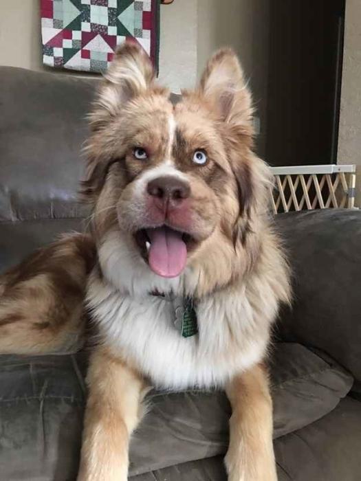 Этот пес лишь хочет, чтобы этот день поскорее закончился.