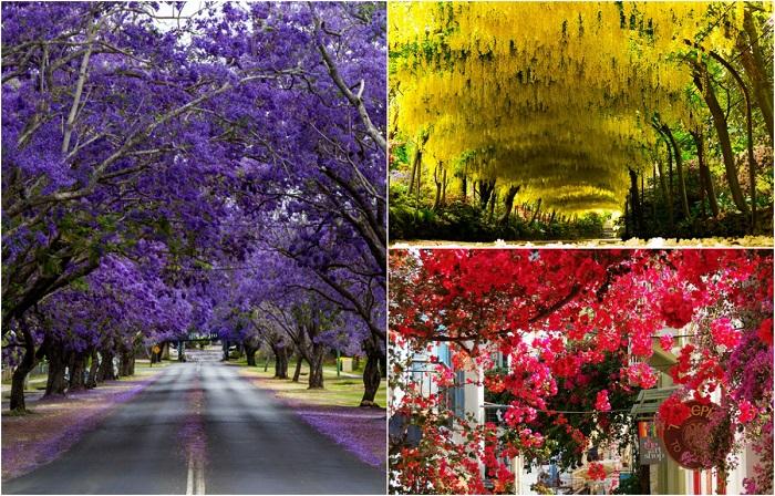 Буйство цветочных красок на улицах мира.