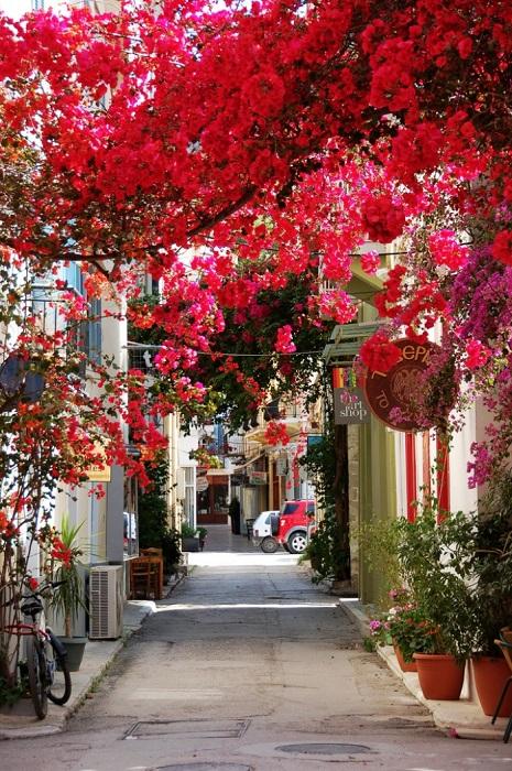 Одна из самых красивых улиц города Нафплион (Греция) утопает в ярко-красных цветах.