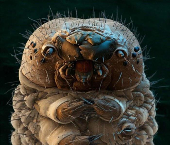 Рот гусеницы под микроскопом.