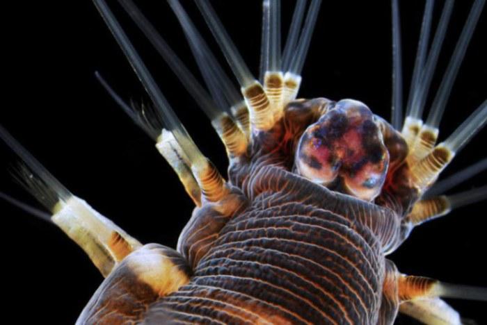 Фотограф Доктор Альваро Эстевес Миготто из Университета в Сан-Паулу, Центр морской биологии, Бразилия.