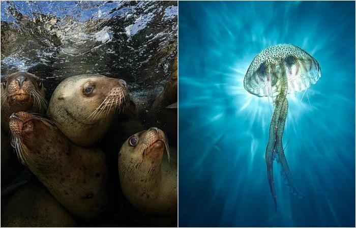 Лучшие фотографии подводного мира 2017 года по версии журнала Scuba Diving Magazine.