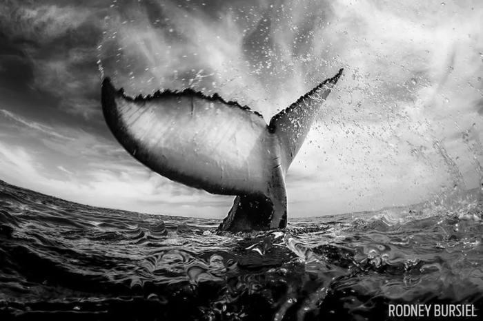 Первое место в категории «Широкоугольное фото» занял американский фотограф Родни Бурсиэль (Rodney Bursiel).