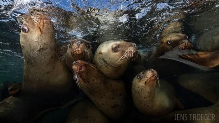 Третье место в категории «Широкоугольная фотография» присуждено американскому фотографу Дженсу Троегеру (Jens Troeger).