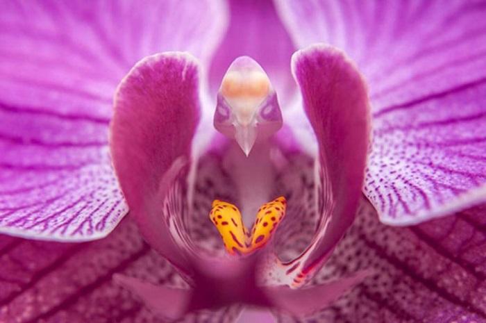 Вечнозелёные, постоянно цветущие орхидеи, которые пользуются большой популярностью благодаря своей неприхотливости и исключительному разнообразию цветков.