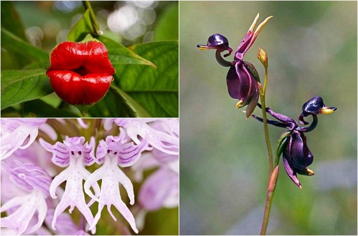 Самые необычные орхидеи.