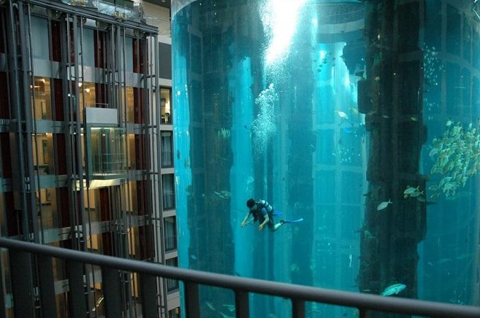 Часть шахты лифта, в которой живет более 1500 рыб.