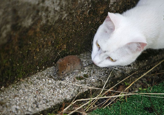 Мышка подружилась с кошкой.