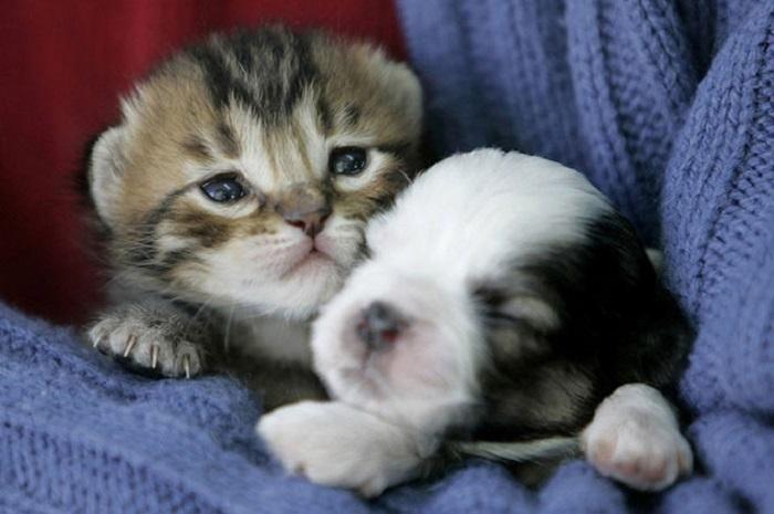 В доме у Мохаммеда Аль-Хамури в Аммане живет щенок и котенок.