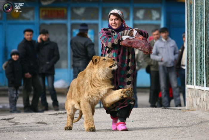 Работница зоопарка, прогуливается со своим подопечным по территории зоопарка.