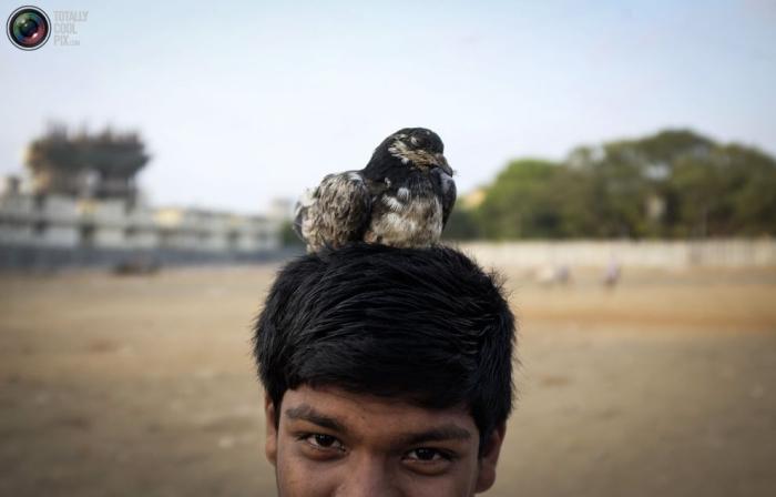 Птенец голубя на голове индийского подростка, Мумбаи, Индия.