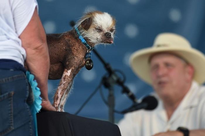 Собаки оцениваются по нескольким критериям – первому впечатлению, реакции зрителей и естественному несовершенству.