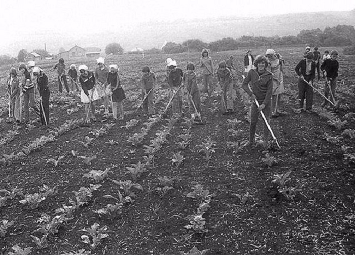 Организованное добровольно-принудительное привлечение советских граждан к сельскохозяйственным работам.