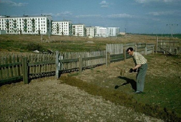 Уход за огородом. СССР, Москва, 1964 год.