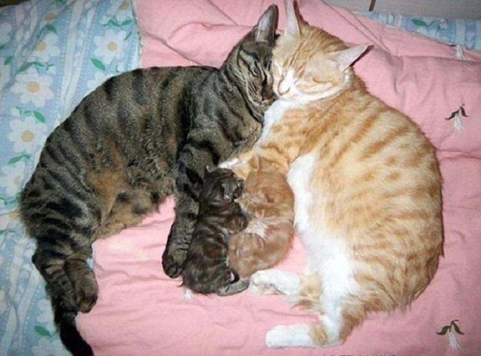 Счастливое кошачье семейство с потомством.