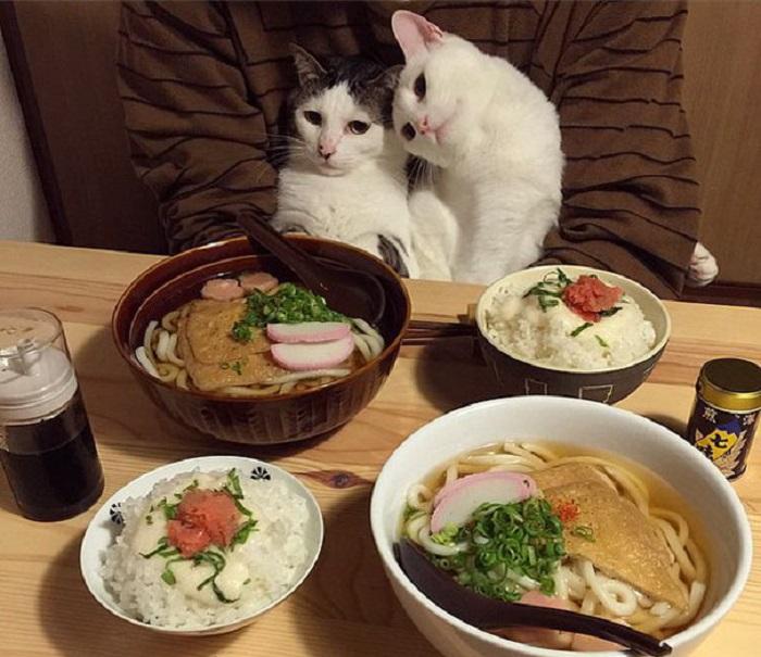 Кошки уже готовы к Дню Влюблённых!
