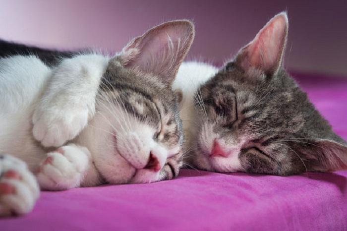 Счастливые котейки.