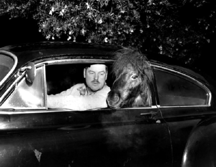 Мужчина и лошадь в автомобиле.