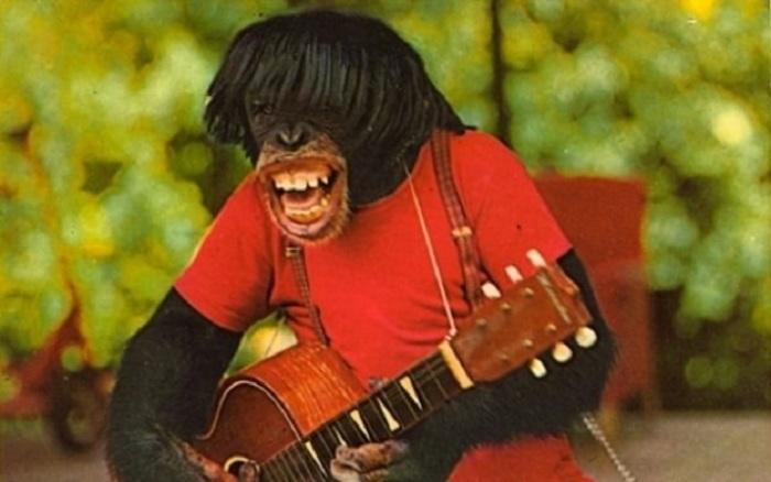 Одна из сцен шоу «Шимпанзе», которое часто проводилось в «Monkey Jungle» в Майями.