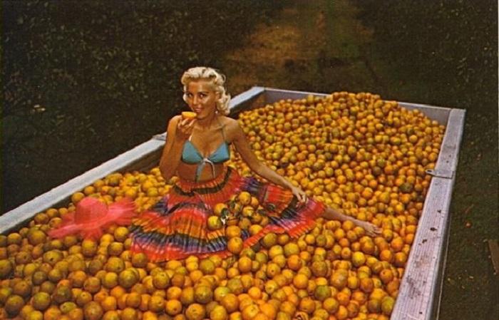 Тематическая открытка, посвященная сбору урожая цитрусовых во Флориде.