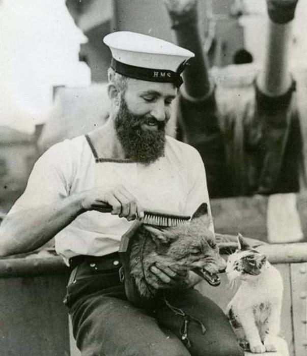 Моряк расчесывает чучело лисы.