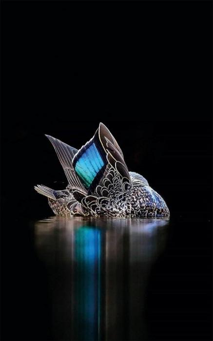 Автор фотографии: Georgina Steytler, Австралия.