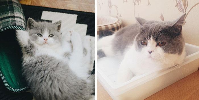 С возрастом этот представитель кошачьего семейства стал выглядеть еще шикарнее.