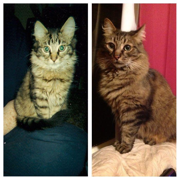 Прозак - непревзойденный мышелов, талантливый исполнитель кошачьих партий и просто красивый кот.