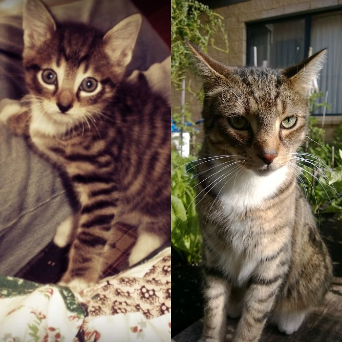 Именно столько килограмм прибавил в весе этот полосатый котенок, пока вырос в огромную Кису.