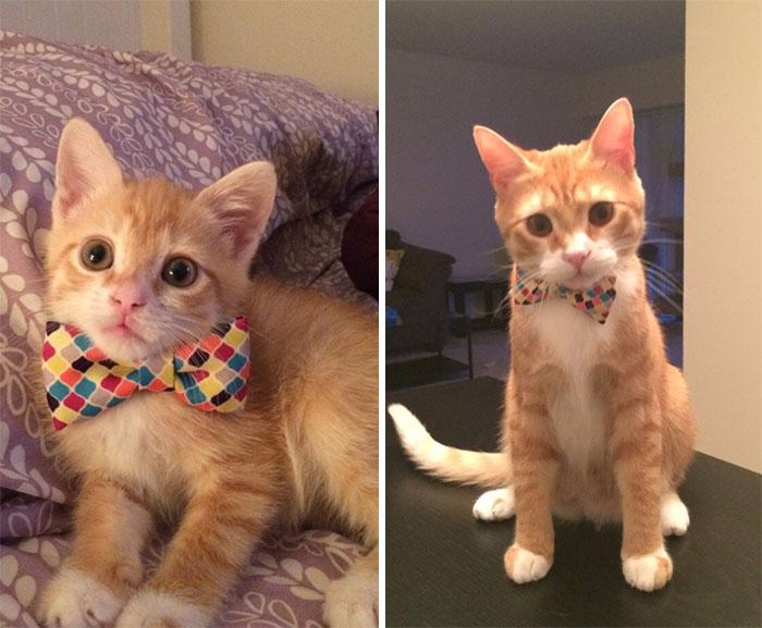 Забавный и милый рыжий котенок вырос в солидного взрослого кота.