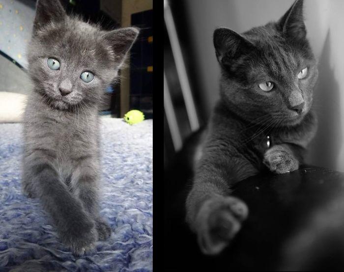 Удивительный котенок со временем превратился в невероятно грациозного красавца.