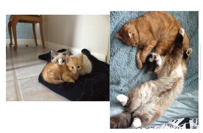 Котята Биг и Джинджи даже став взрослыми сохранили свою крепкую дружбу.