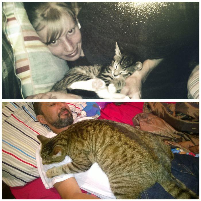 Никто даже не мог представить, что маленькая Киса вырастет в настолько огромную и очень добрую кошку.