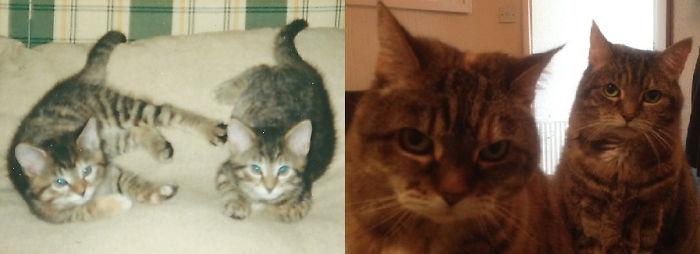 Разница между фотографиями составляет 17 лет, которые эти коты провели вместе.