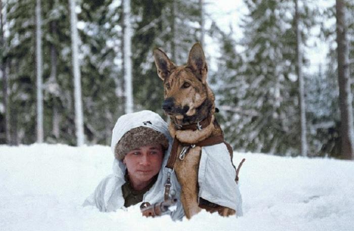 Финский солдат на обучении военных собак в Хямеенлинне, Финляндия. Февраль 1941 г.