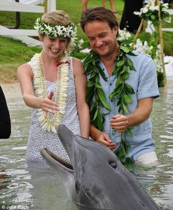 На Гавайях молодоженов поздравил дельфин.