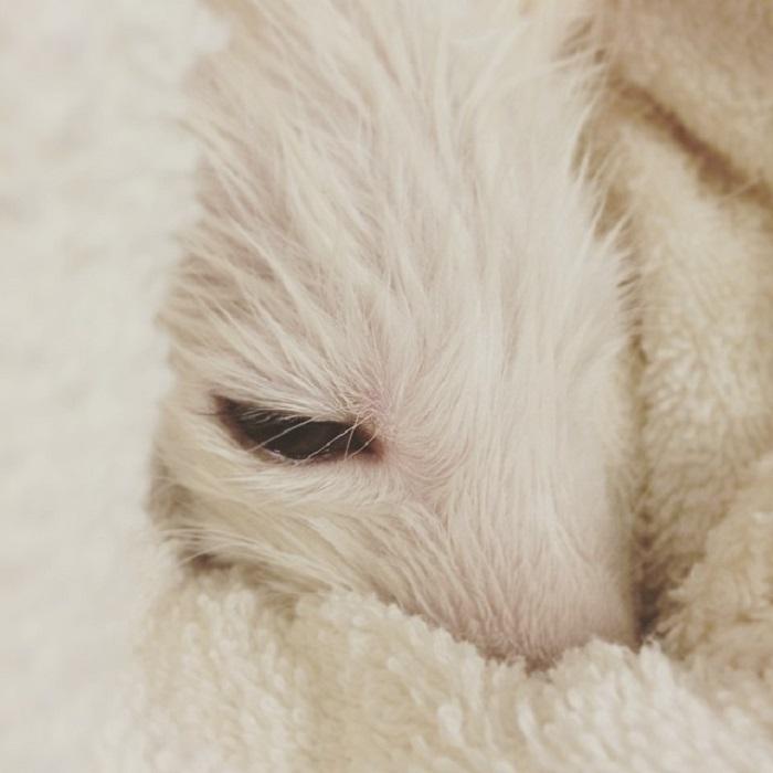 У хозяйки лисы уже имеется опыт в воспитании экзотических животных и, кроме того, большой опыт в воспитании собак.