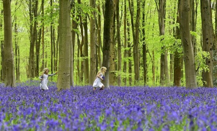 Две девочки бегают по полю, усеянному колокольчиками, Мальборо, Южная Англия.