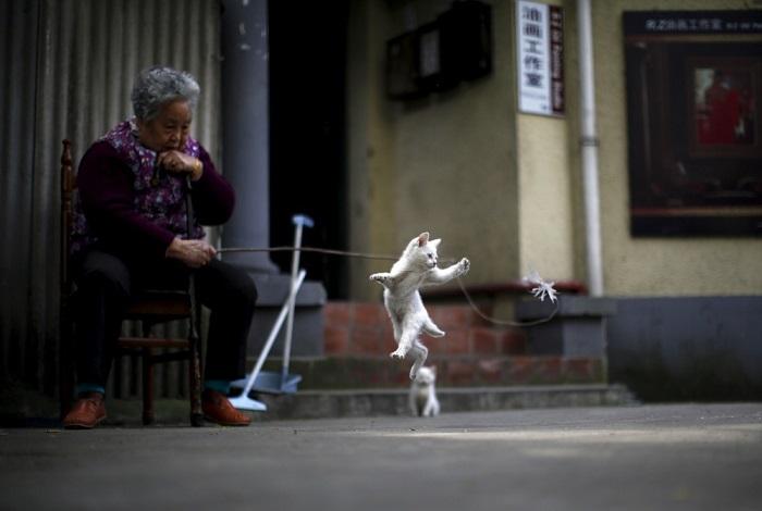 Пожилая женщина играет с котенком возле своего дома, Шанхай, Китай.
