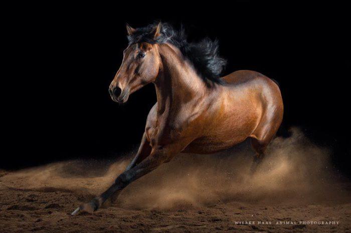 Резвящийся конь.