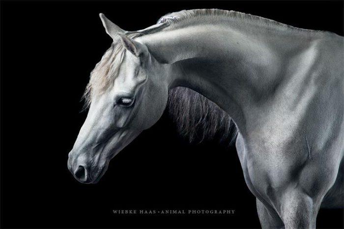 Грациозный и магический конь.