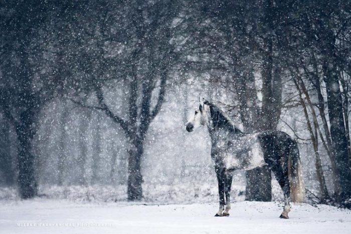 Лошадь в зимнем лесу.
