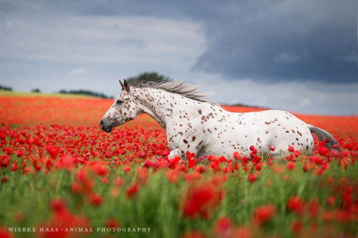 Лошадь бегущая по просторам.
