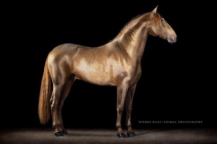 Красота и изящество величественного животного.