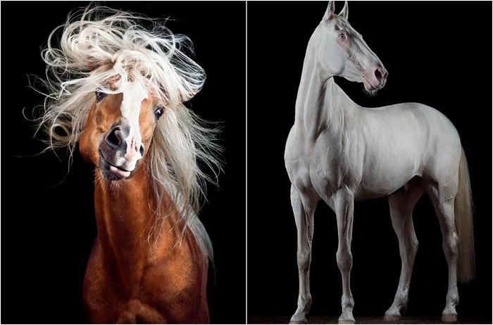 Умные, верные, гордые, сильные лошади.