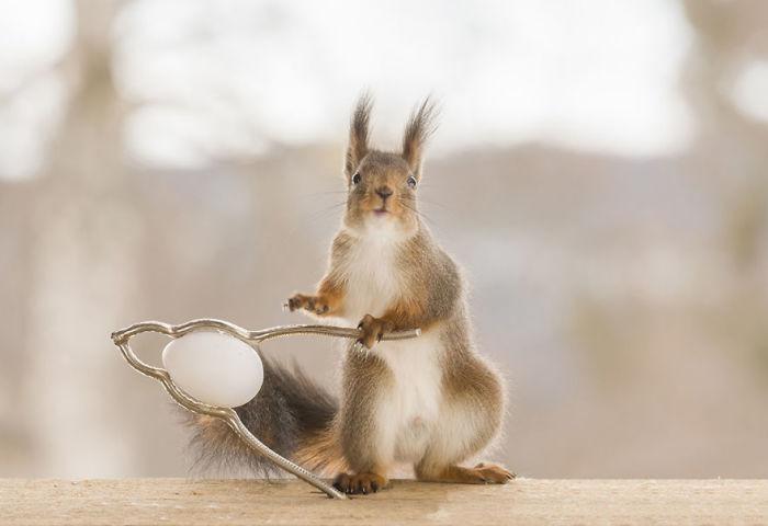 Фотограф Герт Вегген (Geert Weggen), живущий в Швеции, каждый год создает веселые тематические снимки с животными.